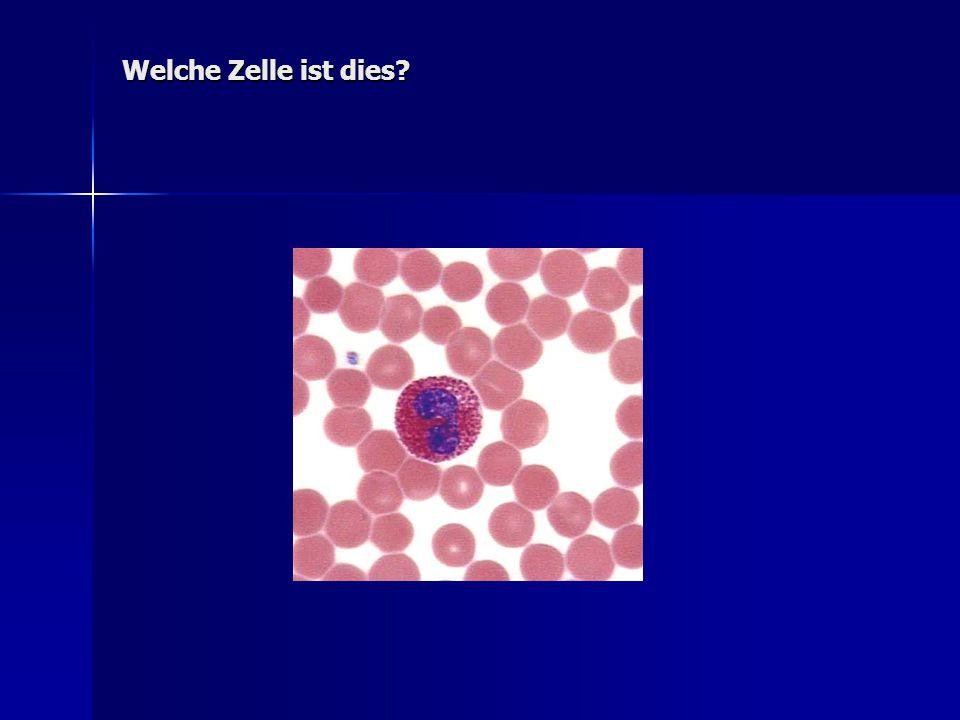 Welche Zelle ist dies?
