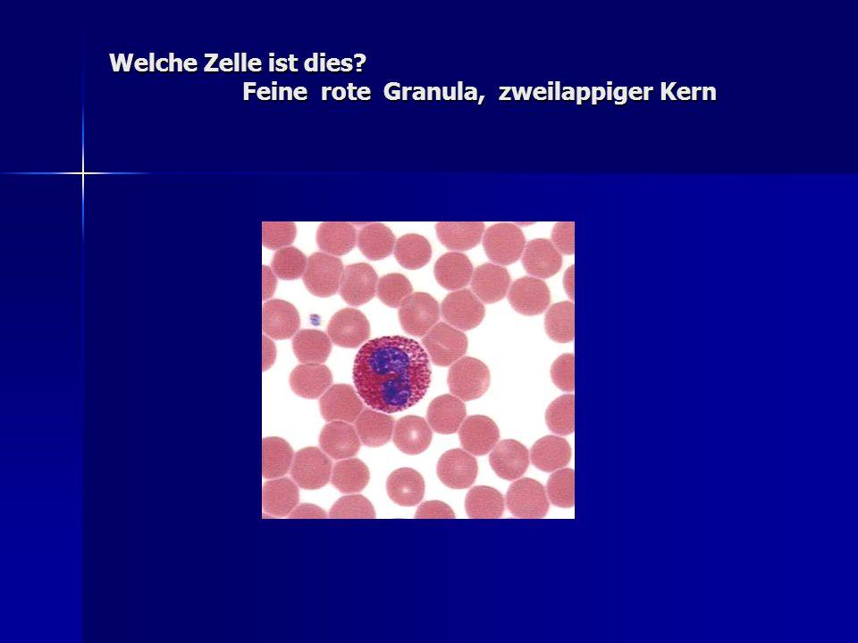 Welche Zelle ist dies? Feine rote Granula, zweilappiger Kern