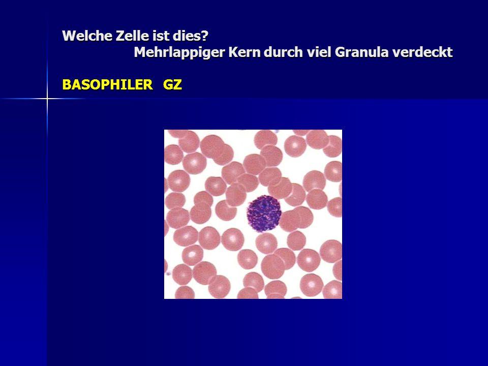 Welche Zelle ist dies? Mehrlappiger Kern durch viel Granula verdeckt BASOPHILER GZ