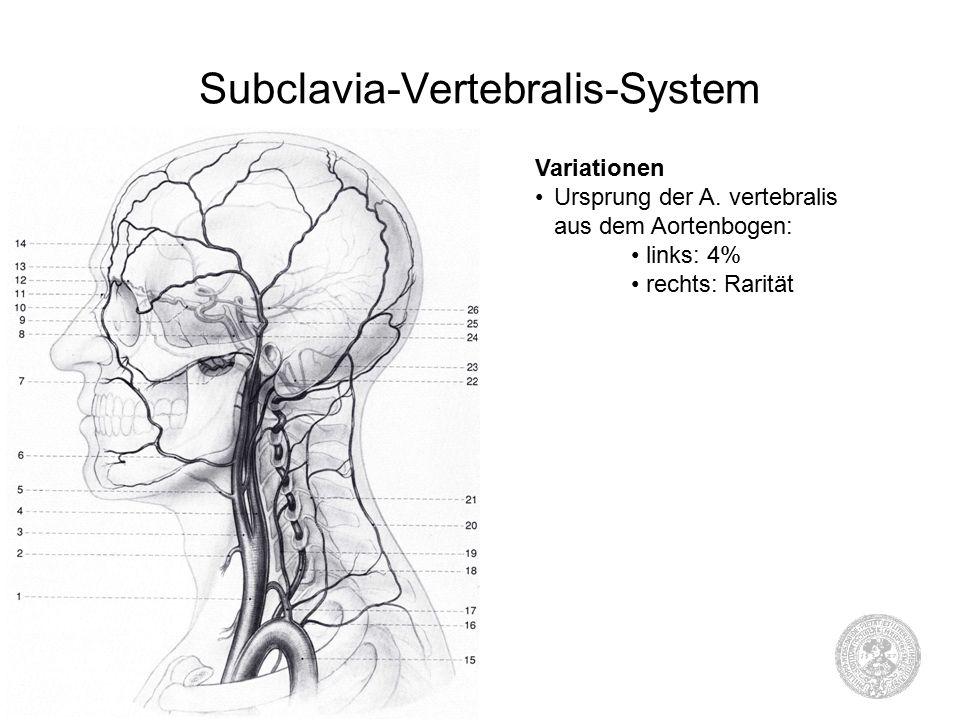 Subclavia-Vertebralis-System Variationen Ursprung der A.