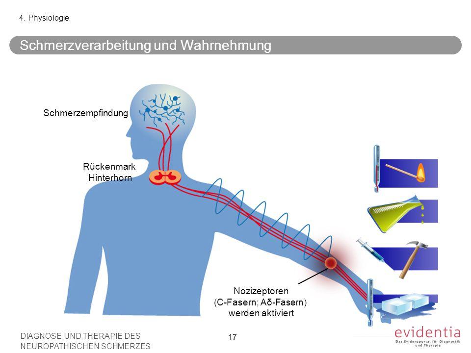 Schmerzempfindung Nozizeptoren (C-Fasern; Aδ-Fasern) werden aktiviert Rückenmark Hinterhorn Schmerzverarbeitung und Wahrnehmung 4. Physiologie DIAGNOS