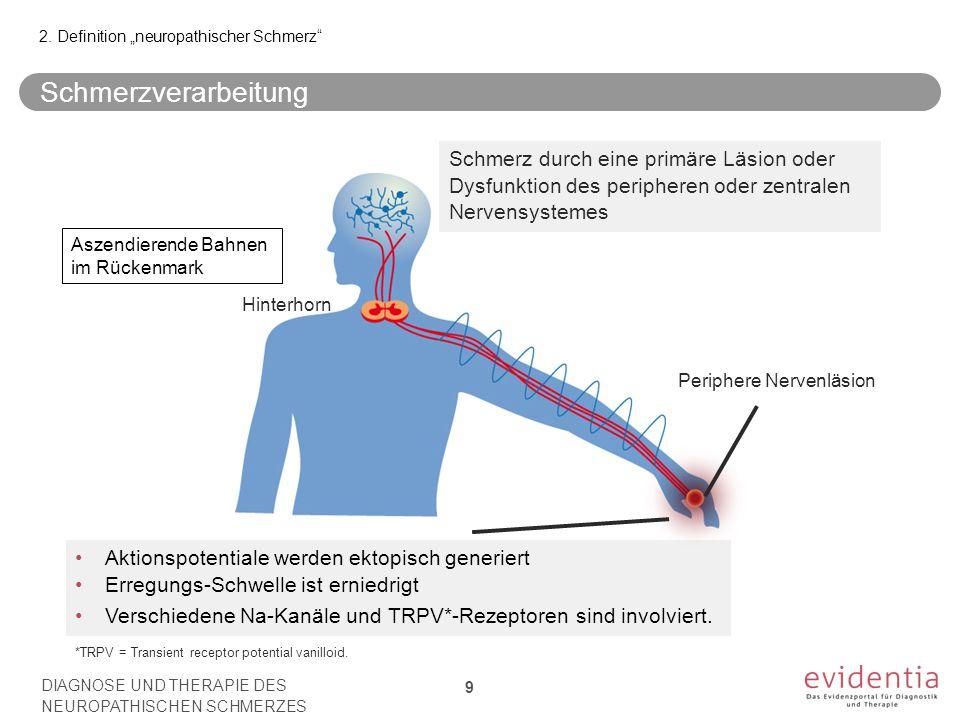 *TRPV = Transient receptor potential vanilloid. Hinterhorn Periphere Nervenläsion Schmerz durch eine primäre Läsion oder Dysfunktion des peripheren od
