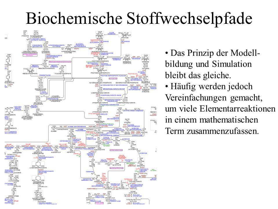 Biochemische Stoffwechselpfade Das Prinzip der Modell- bildung und Simulation bleibt das gleiche. Häufig werden jedoch Vereinfachungen gemacht, um vie