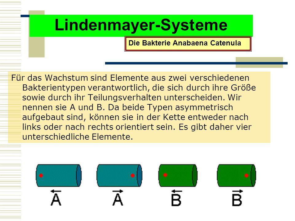 Lindenmayer-Systeme Für das Wachstum sind Elemente aus zwei verschiedenen Bakterientypen verantwortlich, die sich durch ihre Größe sowie durch ihr Teilungsverhalten unterscheiden.