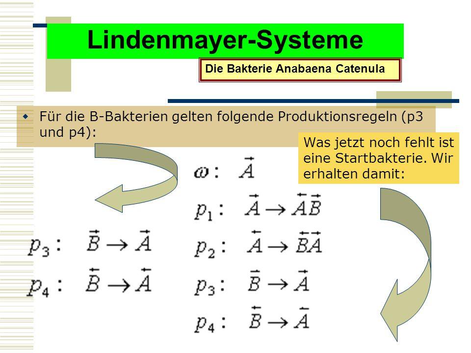 Lindenmayer-Systeme  Für die B-Bakterien gelten folgende Produktionsregeln (p3 und p4): Die Bakterie Anabaena Catenula Was jetzt noch fehlt ist eine Startbakterie.