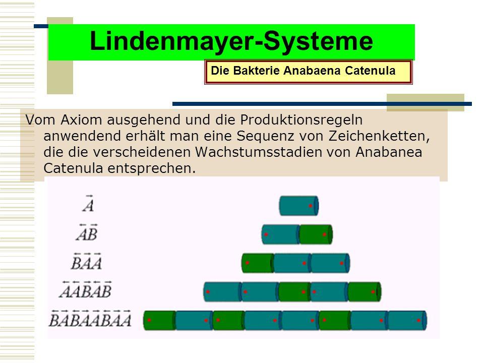 Lindenmayer-Systeme Vom Axiom ausgehend und die Produktionsregeln anwendend erhält man eine Sequenz von Zeichenketten, die die verscheidenen Wachstumsstadien von Anabanea Catenula entsprechen.