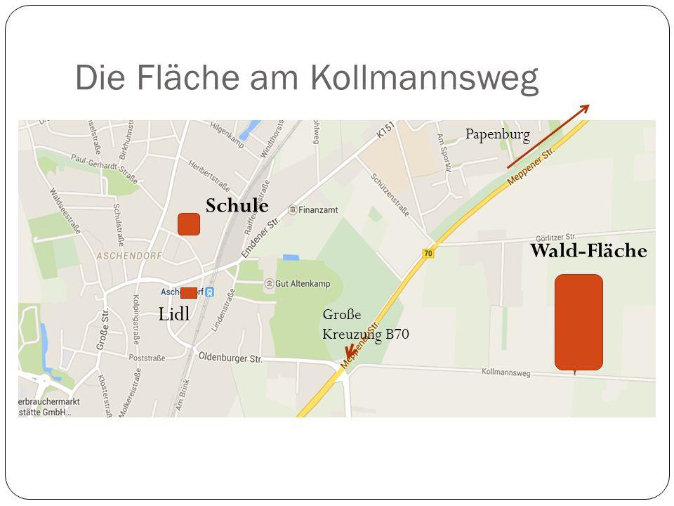 Die Fläche am Kollmannsweg Schule Lidl Wald-Fläche Große Kreuzung B70 Papenburg