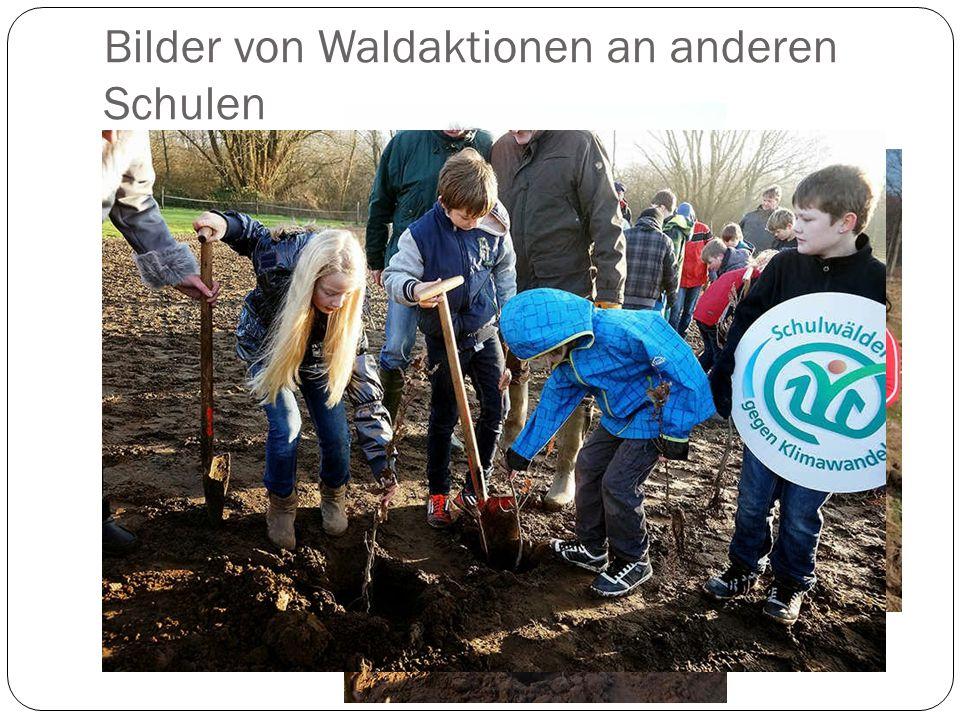 Bilder von Waldaktionen an anderen Schulen