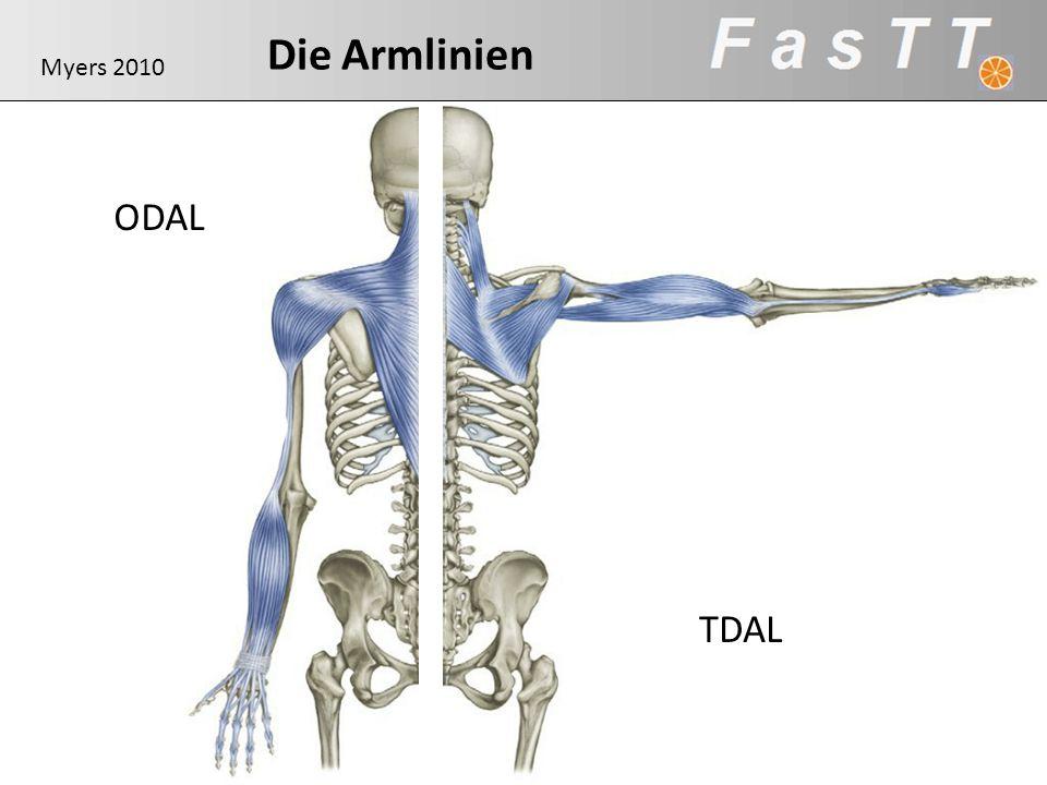 Die Armlinien ODAL TDAL Myers 2010