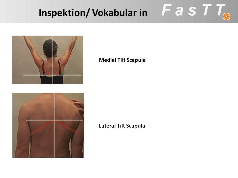 Inspektion/ Vokabular in Medial Tilt Scapula Lateral Tilt Scapula