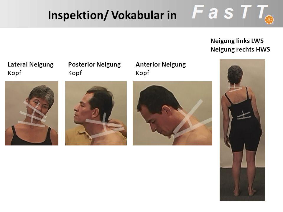Inspektion/ Vokabular in Anterior Neigung Kopf Posterior Neigung Kopf Neigung links LWS Neigung rechts HWS Lateral Neigung Kopf