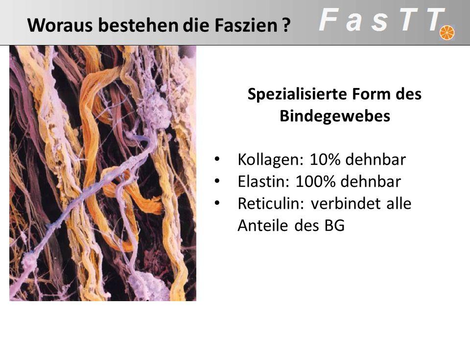 Spezialisierte Form des Bindegewebes Kollagen: 10% dehnbar Elastin: 100% dehnbar Reticulin: verbindet alle Anteile des BG Kollagen Matrix Woraus beste