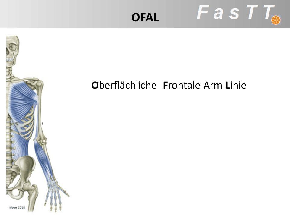 Oberflächliche Frontale Arm Linie OFAL