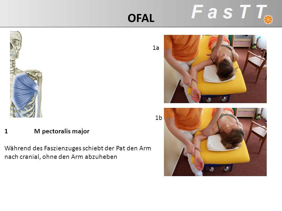 1 M pectoralis major Während des Faszienzuges schiebt der Pat den Arm nach cranial, ohne den Arm abzuheben 1b 1a