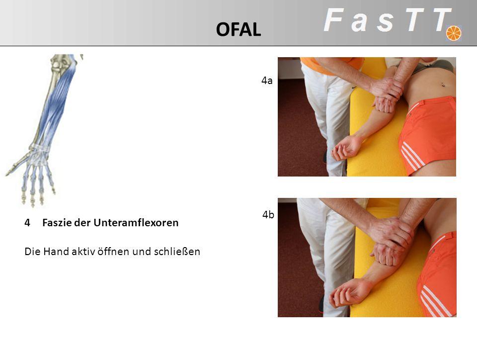 4a 4b 4Faszie der Unteramflexoren Die Hand aktiv öffnen und schließen OFAL
