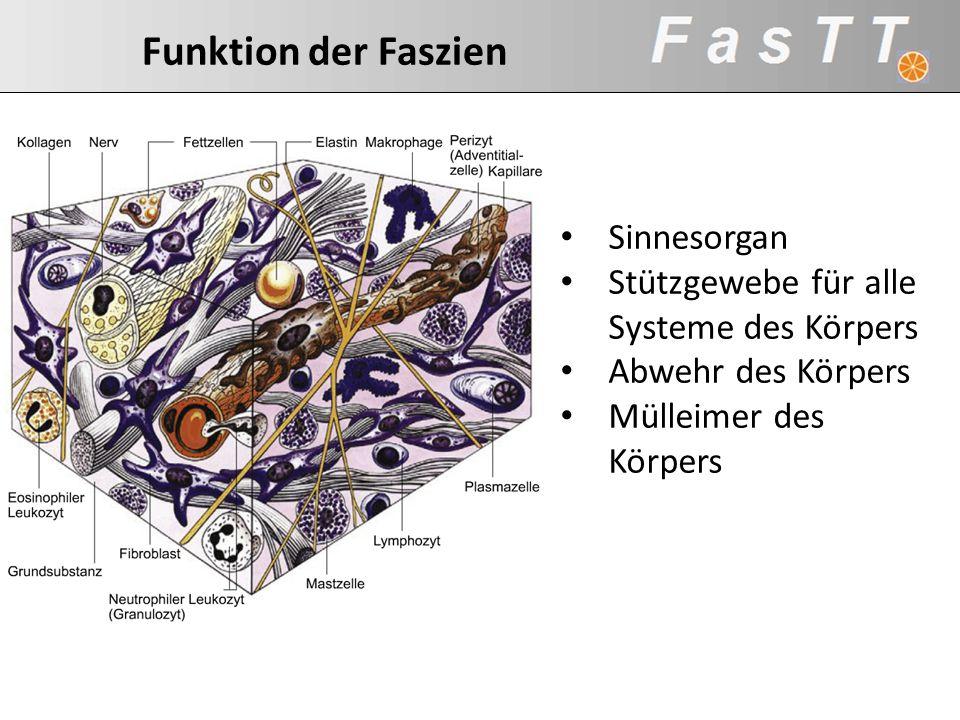 Sinnesorgan Stützgewebe für alle Systeme des Körpers Abwehr des Körpers Mülleimer des Körpers Aufgaben der Faszien Kollagen Matrix Aufgaben der Faszie