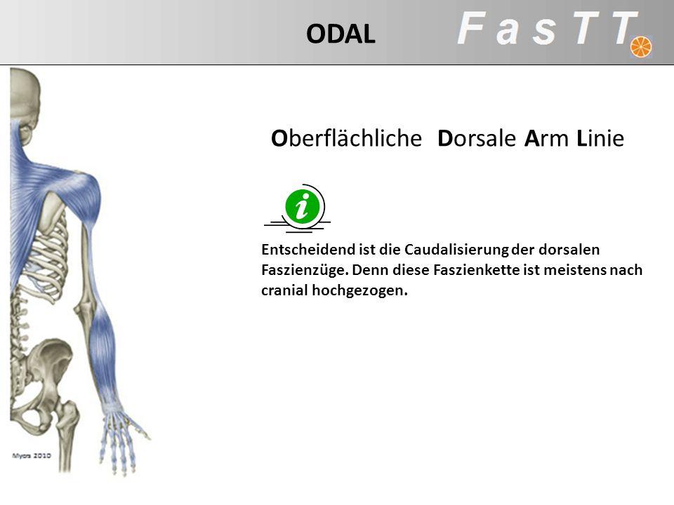 Entscheidend ist die Caudalisierung der dorsalen Faszienzüge. Denn diese Faszienkette ist meistens nach cranial hochgezogen. ODAL Oberflächliche Dorsa