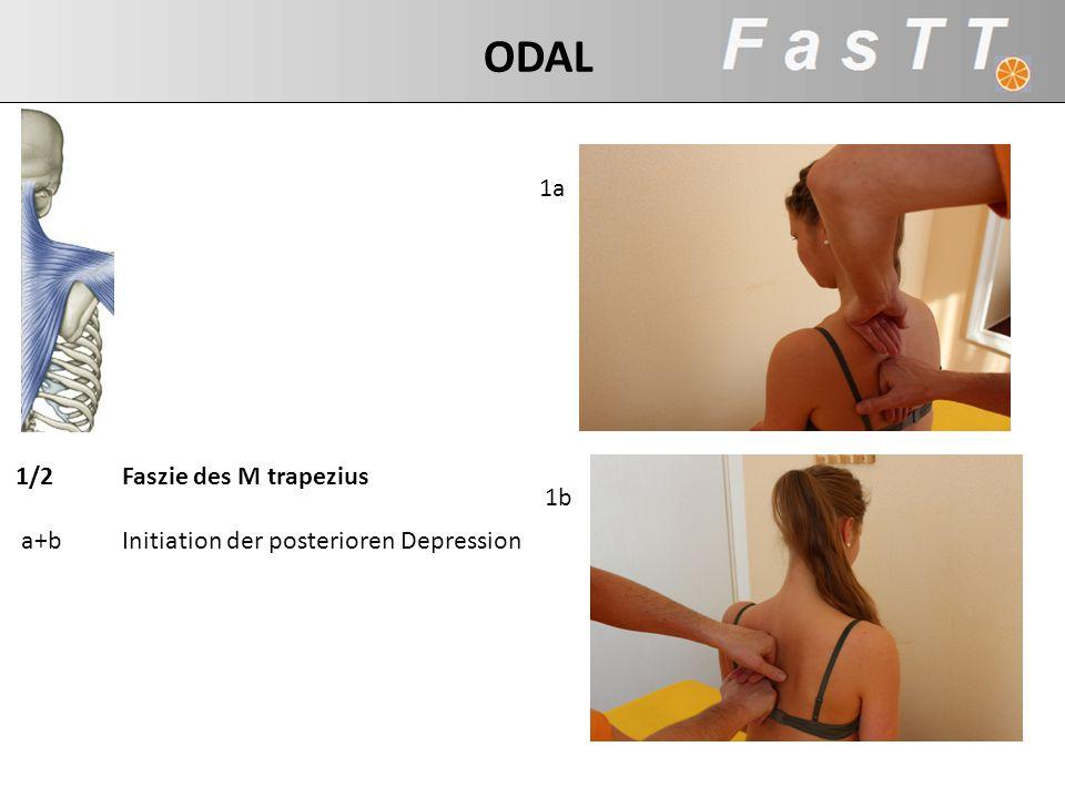 1a 1b 1/2Faszie des M trapezius a+bInitiation der posterioren Depression ODAL