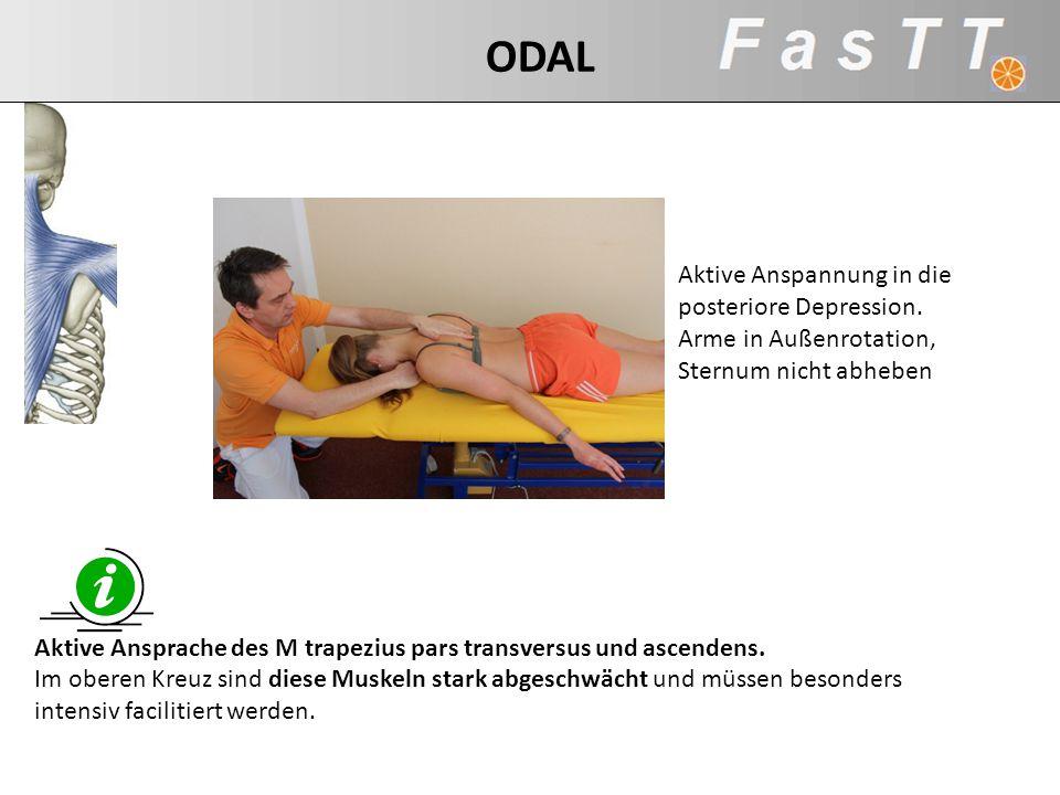 Aktive Anspannung in die posteriore Depression. Arme in Außenrotation, Sternum nicht abheben Aktive Ansprache des M trapezius pars transversus und asc