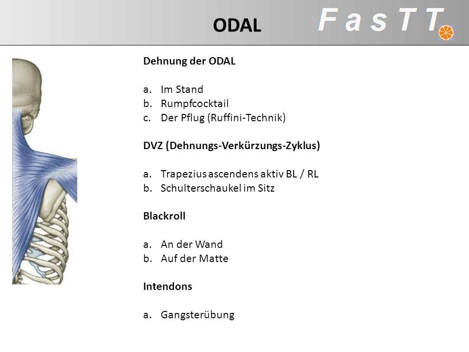 Dehnung der ODAL a.Im Stand b.Rumpfcocktail c.Der Pflug (Ruffini-Technik) DVZ (Dehnungs-Verkürzungs-Zyklus) a.Trapezius ascendens aktiv BL / RL b.Schu