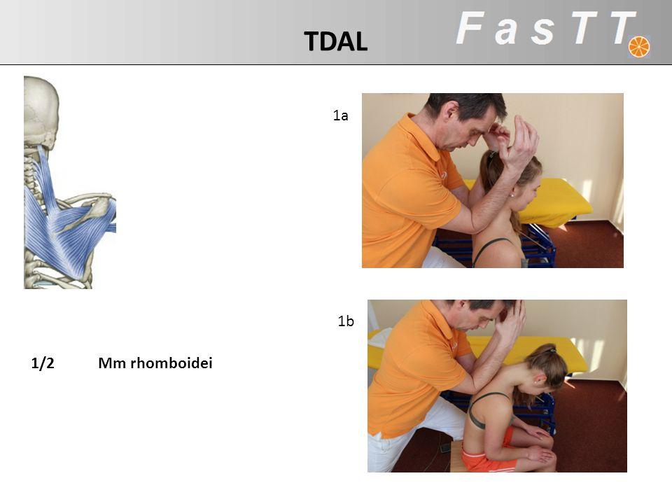 1a 1b 1/2Mm rhomboidei TDAL