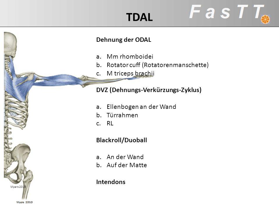 Myers 2010 TDAL Dehnung der ODAL a.Mm rhomboidei b.Rotator cuff (Rotatorenmanschette) c.M triceps brachii DVZ (Dehnungs-Verkürzungs-Zyklus) a.Ellenbog