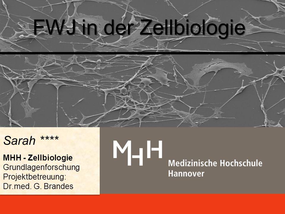 FWJ in der Zellbiologie Sarah **** MHH - Zellbiologie Grundlagenforschung Projektbetreuung: Dr.med.