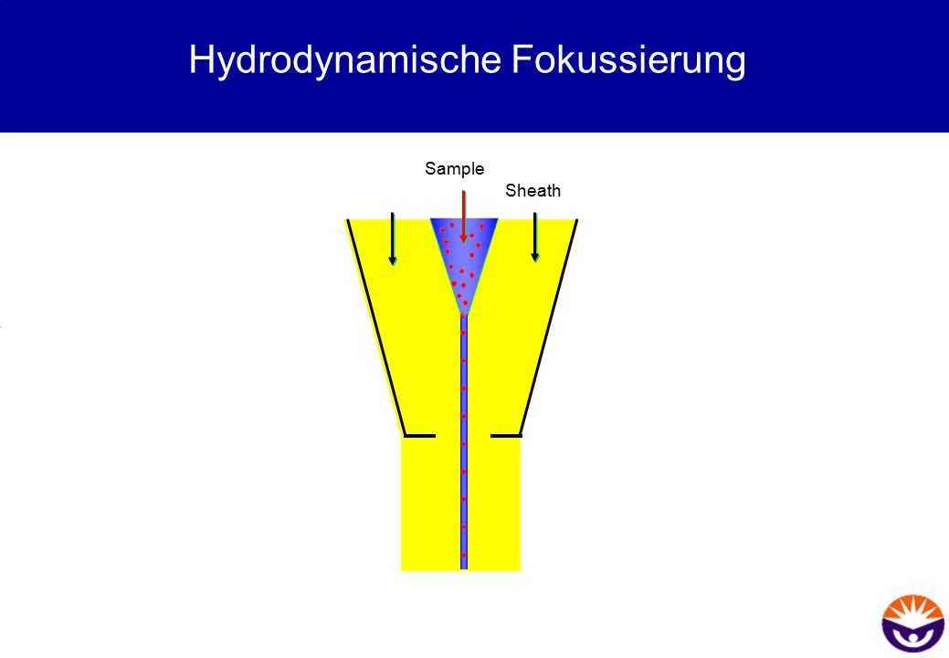 Hydrodynamische Fokussierung Sheath Sample