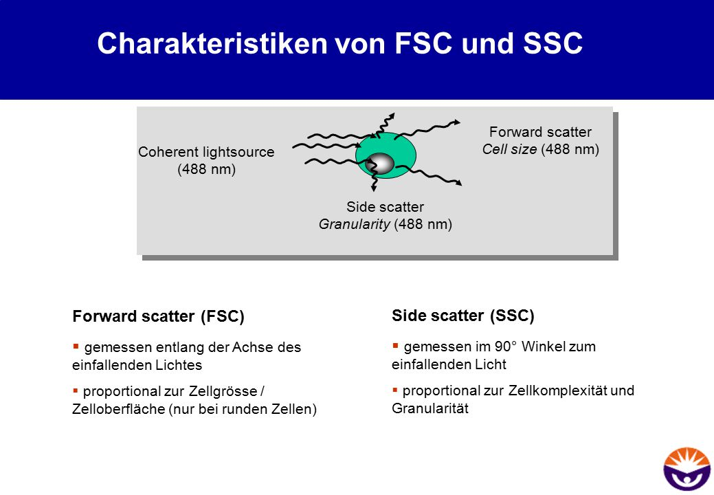 Charakteristiken von FSC und SSC Coherent lightsource (488 nm) Forward scatter Cell size (488 nm) Side scatter Granularity (488 nm) Forward scatter (F
