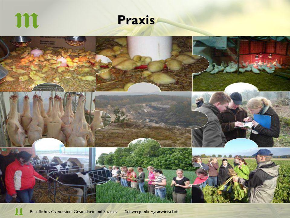 Berufliches Gymnasium Gesundheit und Soziales Schwerpunkt AgrarwirtschaftPraxis