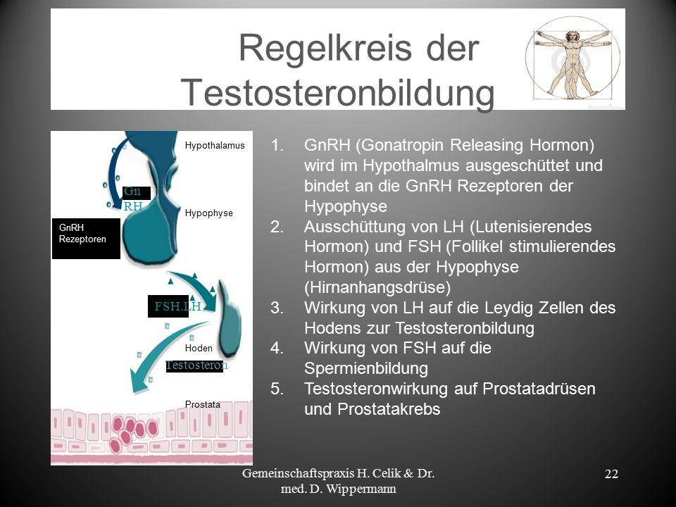 Regelkreis der Testosteronbildung Gemeinschaftspraxis H. Celik & Dr. med. D. Wippermann 22 GnRH Rezeptoren Testosteron FSH.LH Gn RH Hypothalamus Hypop