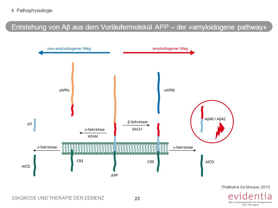 Entstehung von Aβ aus dem Vorläufermolekül APP – der «amyloidogene pathway» 23 4. Pathophysiologie [Thathiah & De Strooper, 2011] DIAGNOSE UND THERAPI