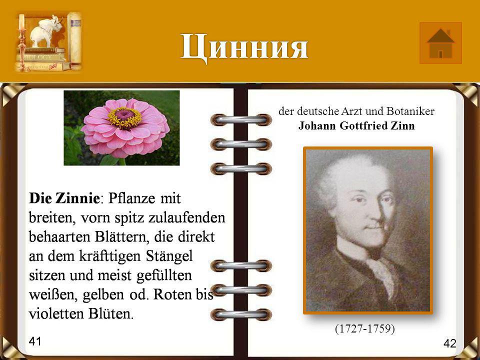 Цинния der deutsche Arzt und Botaniker Johann Gottfried Zinn (1727-1759) 42