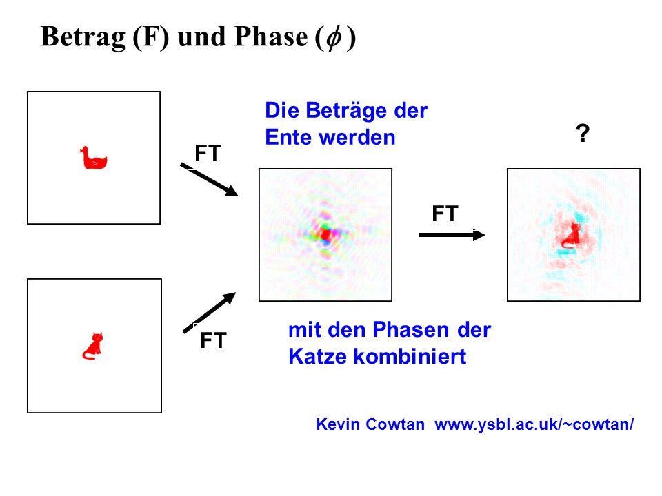 Betrag (F) und Phase (  ) FT mit den Phasen der Katze kombiniert Die Beträge der Ente werden .