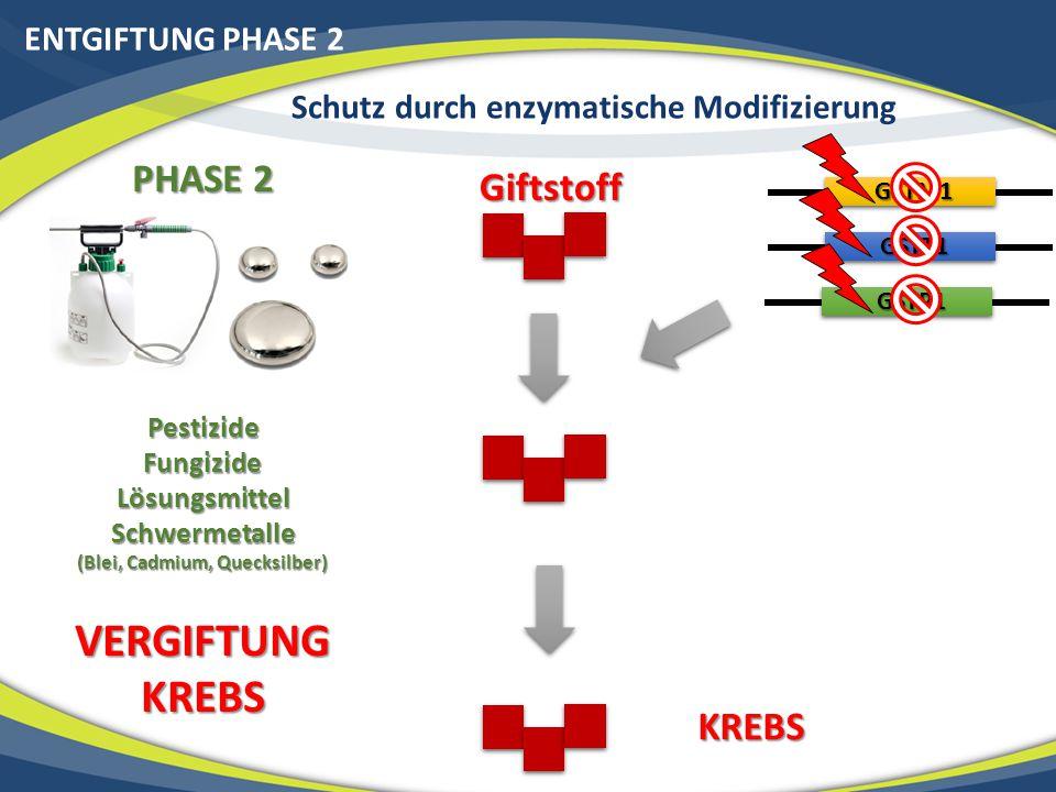 ENTGIFTUNG PHASE 2 Schutz durch enzymatische Modifizierung PHASE 2 PestizideFungizideLösungsmittelSchwermetalle (Blei, Cadmium, Quecksilber) VERGIFTUN