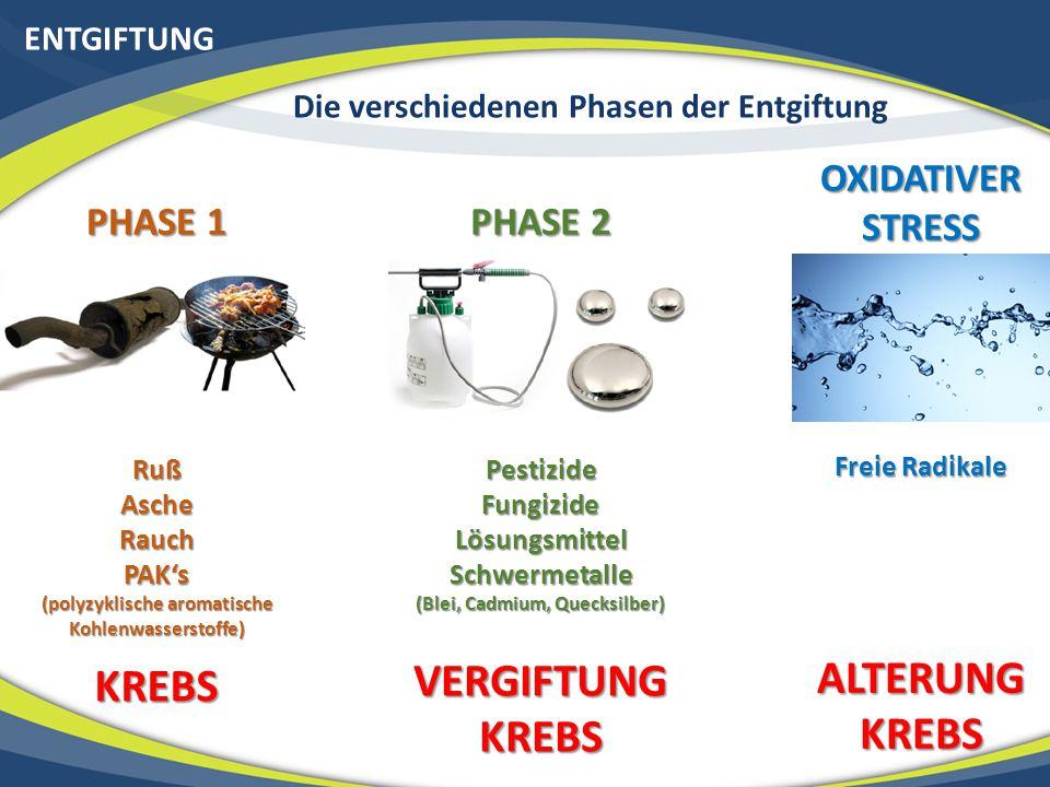 ENTGIFTUNG Die verschiedenen Phasen der Entgiftung PHASE 1 RußAscheRauchPAK's (polyzyklische aromatische Kohlenwasserstoffe) KREBS PHASE 2 PestizideFu