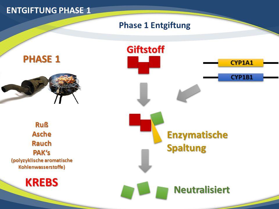 ENTGIFTUNG PHASE 1 Phase 1 Entgiftung PHASE 1 RußAscheRauchPAK's (polyzyklische aromatische Kohlenwasserstoffe) KREBS Giftstoff Enzymatische Spaltung