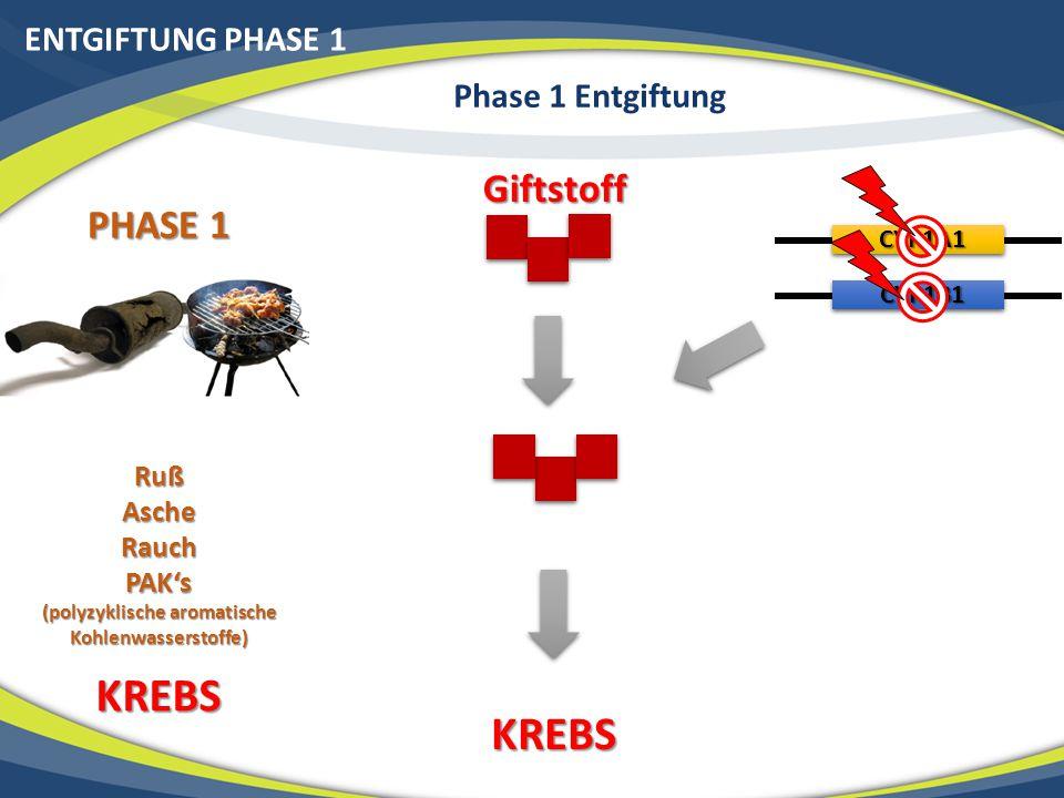 ENTGIFTUNG PHASE 1 Phase 1 Entgiftung PHASE 1 RußAscheRauchPAK's (polyzyklische aromatische Kohlenwasserstoffe) KREBS Giftstoff CYP1A1 CYP1B1 KREBS