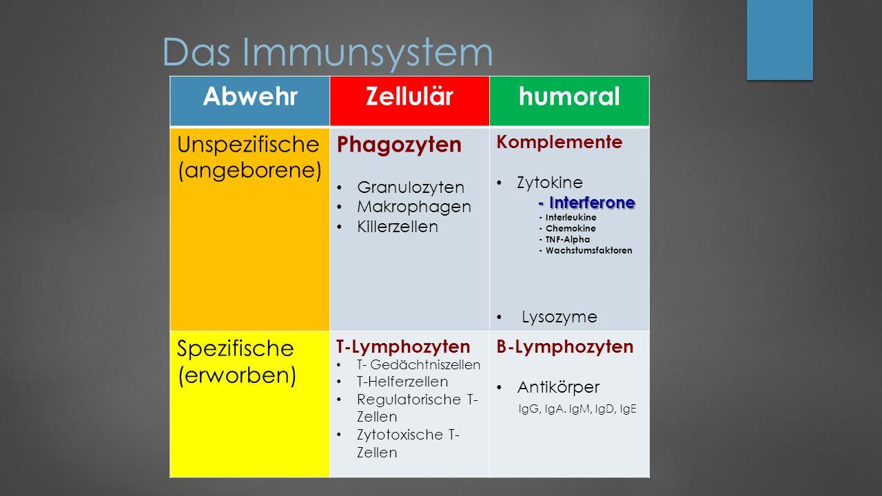 Das Immunsystem AbwehrZellulärhumoral Unspezifische (angeborene) Phagozyten Granulozyten Makrophagen Killerzellen Komplemente Zytokine - Interferone - Interleukine - Chemokine - TNF-Alpha - Wachstumsfaktoren Lysozyme Spezifische (erworben) T-Lymphozyten T- Gedächtniszellen T-Helferzellen Regulatorische T- Zellen Zytotoxische T- Zellen B-Lymphozyten Antikörper IgG, IgA.