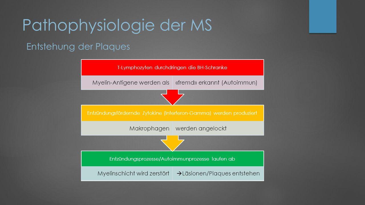 Pathophysiologie der MS Quelle: www.ms-diagnose.ch