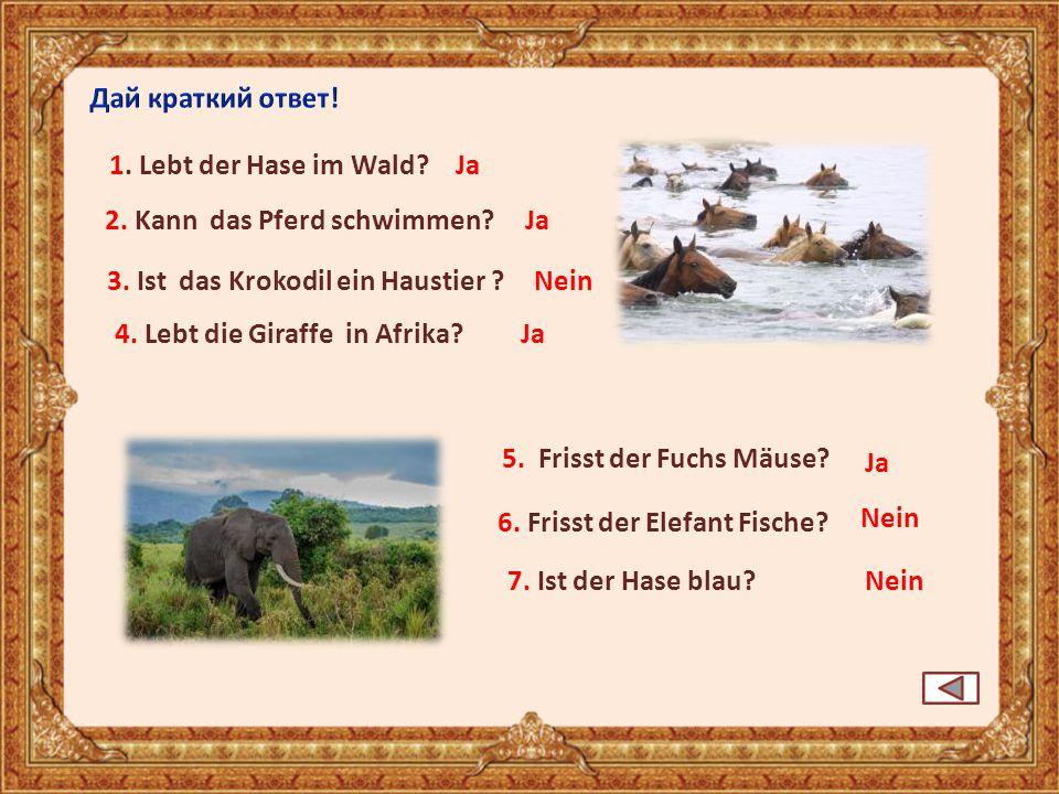 4. Lebt die Giraffe in Afrika? Ja 6. Frisst der Elefant Fische? Nein 5. Frisst der Fuchs Mäuse? 7. Ist der Hase blau? Nein 2. Kann das Pferd schwimmen