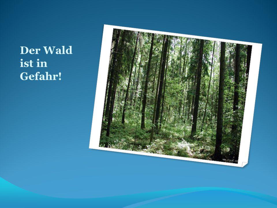 Der Wald ist in Gefahr!