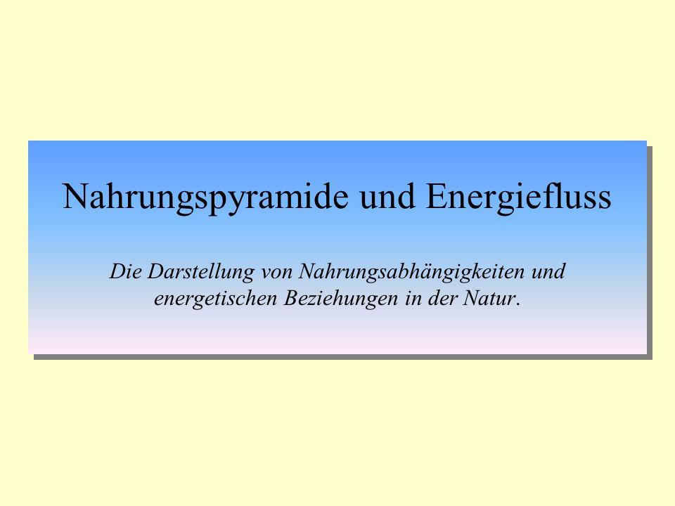 Nahrungspyramide und Energiefluss Die Darstellung von Nahrungsabhängigkeiten und energetischen Beziehungen in der Natur.