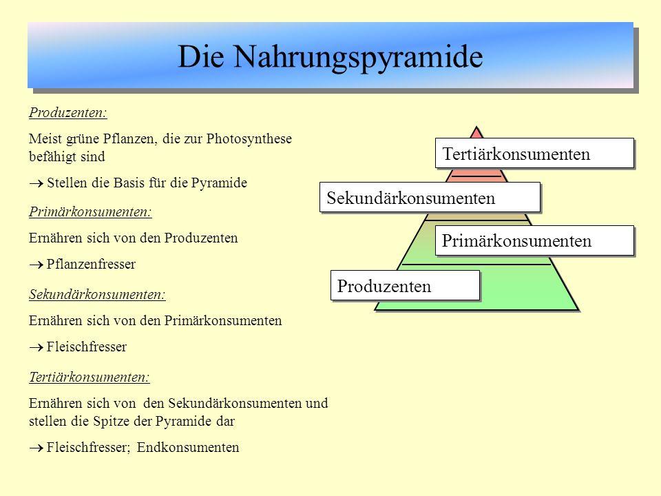 Die Nahrungspyramide Produzenten Primärkonsumenten Sekundärkonsumenten Tertiärkonsumenten Produzenten: Meist grüne Pflanzen, die zur Photosynthese bef
