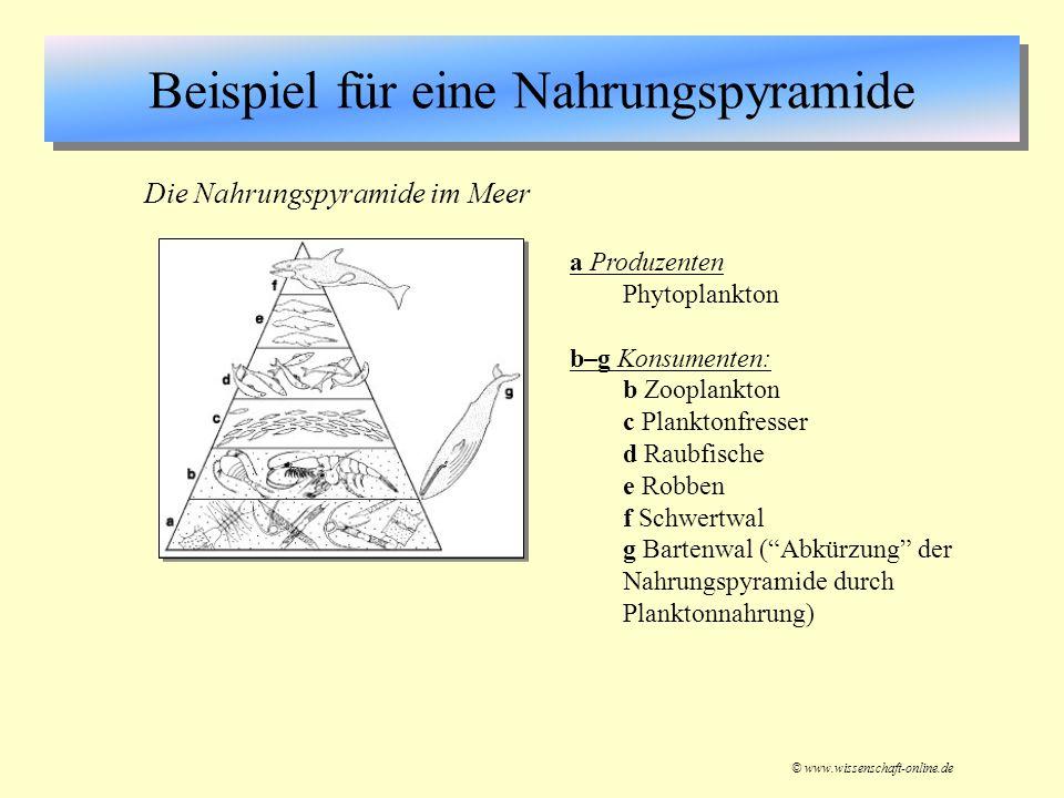 Beispiel für eine Nahrungspyramide © www.wissenschaft-online.de a Produzenten Phytoplankton b–g Konsumenten: b Zooplankton c Planktonfresser d Raubfis