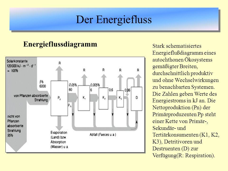 Der Energiefluss Energieflussdiagramm Stark schematisiertes Energieflußdiagramm eines autochthonen Ökosystems gemäßigter Breiten, durchschnittlich pro