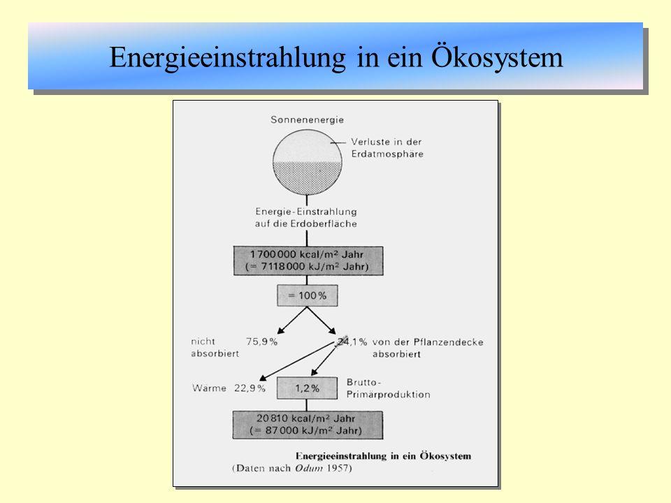 Energiepyramide pyramidenförmige Darstellung der Energiegehalte in den Trophiestufen eines abgegrenzten biozönotischen Systems (See, Wald usw.) Prozentsatz der Nutzung der vorangegangenen Stufe ist die ökologische Effizienz