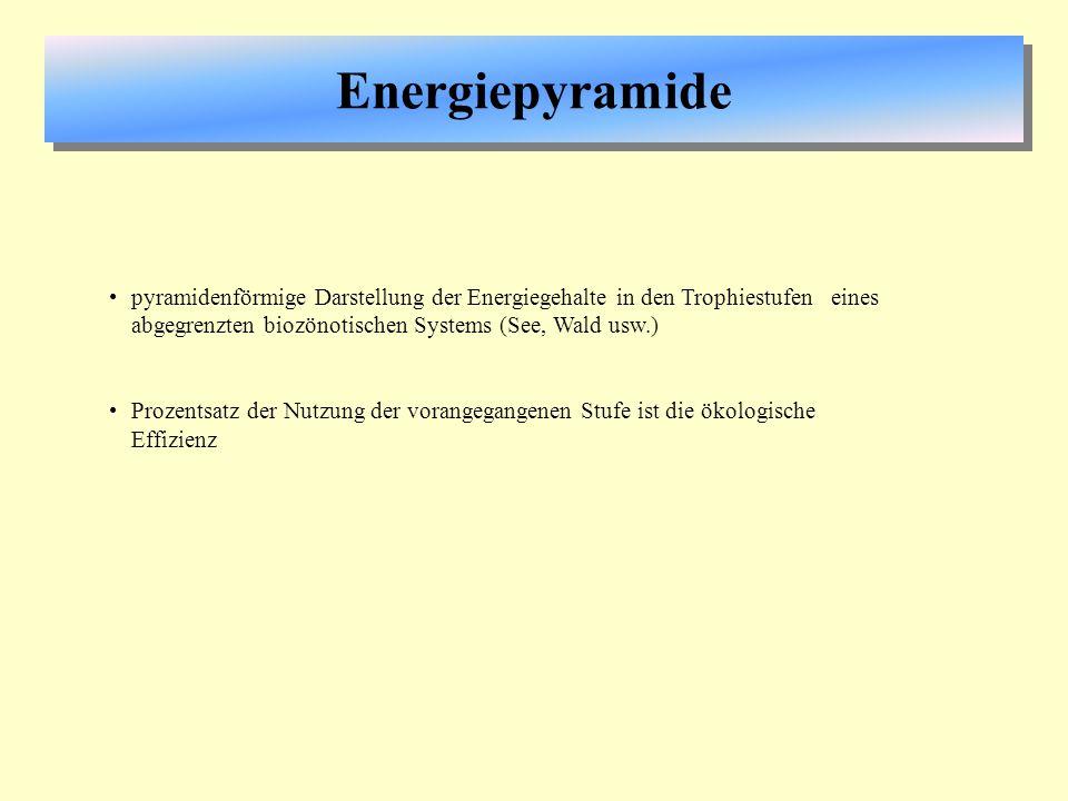 Energiepyramide pyramidenförmige Darstellung der Energiegehalte in den Trophiestufen eines abgegrenzten biozönotischen Systems (See, Wald usw.) Prozen
