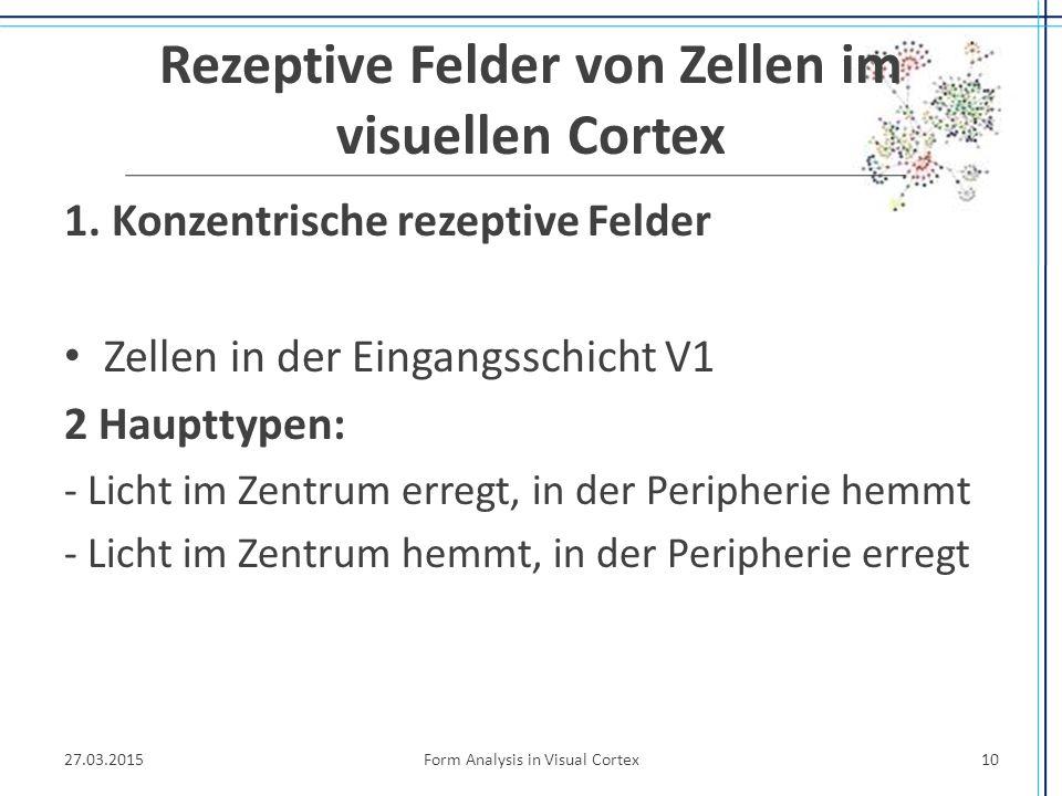 Rezeptive Felder von Zellen im visuellen Cortex 1. Konzentrische rezeptive Felder Zellen in der Eingangsschicht V1 2 Haupttypen: - Licht im Zentrum er