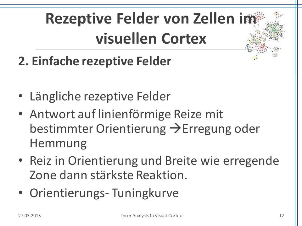 Rezeptive Felder von Zellen im visuellen Cortex 2. Einfache rezeptive Felder Längliche rezeptive Felder Antwort auf linienförmige Reize mit bestimmter